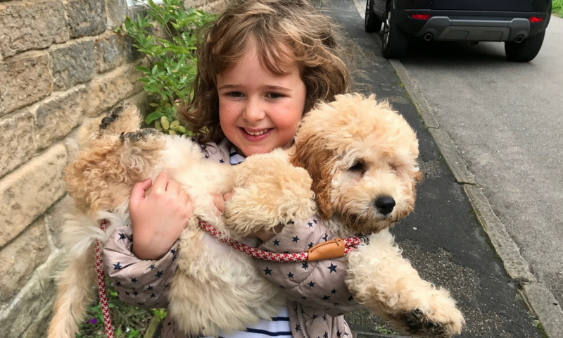 Child holding cockapoo puppy - socialisation training