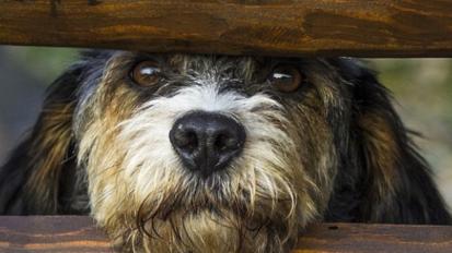 Reinforcing positive behaviour in your dog