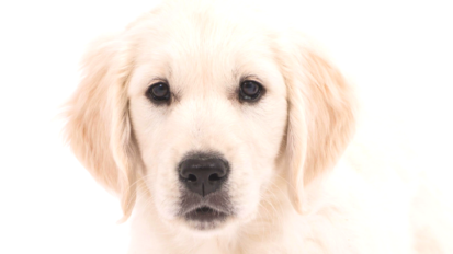 When is the best age to spay or castrate your dog?