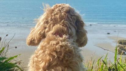 Frankie goes to Church Bay