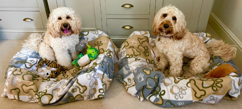 Image of Freya and Frankie in their beds at Ravenstone Manor