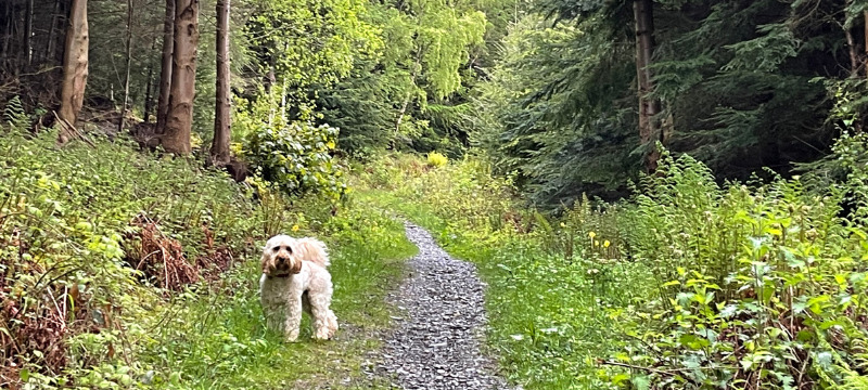 Frankie on the walk directly from Ravenstone Manor