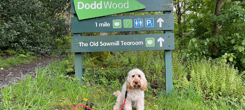 Frankie sitting in front of the Dodd Wood sign just a five minute walk from  Ravenstone Manor