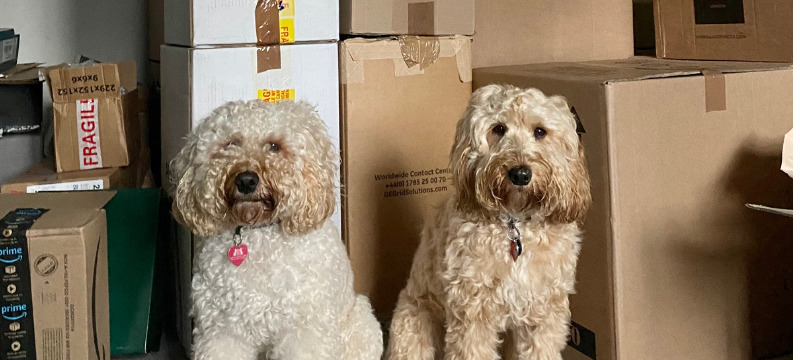 Moving house with a dog -Freya and Frankie among piles of boxes