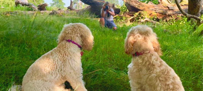Dog photographer taking images